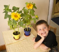 Tom's very proud of the sunflowers he's planted